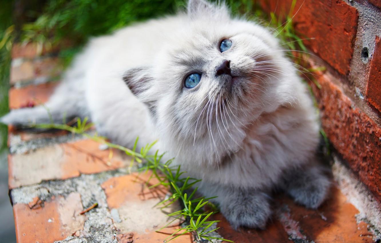 Photo wallpaper kitty, eyes, baby, cute