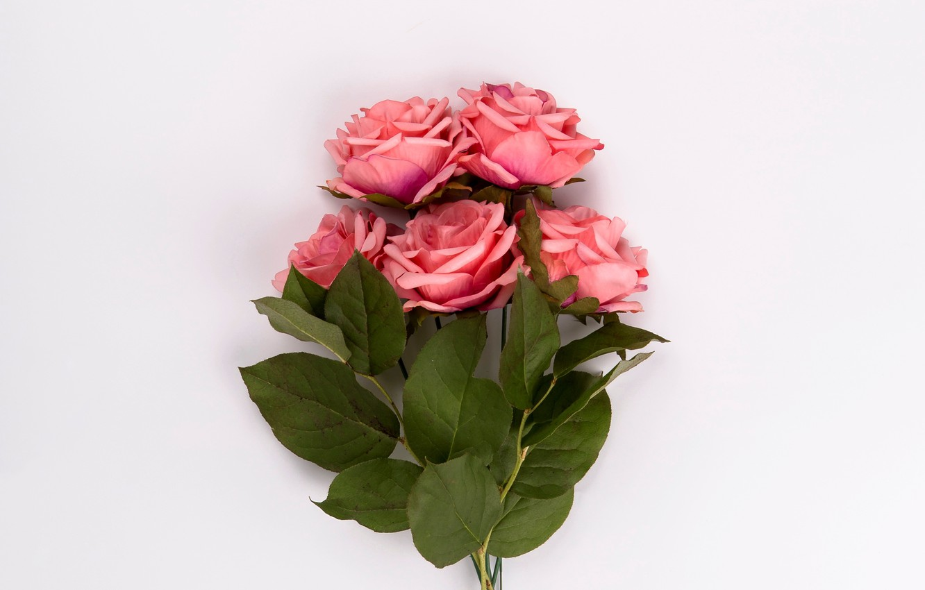 Photo wallpaper roses, bouquet, pink, buds, pink, leaves, roses