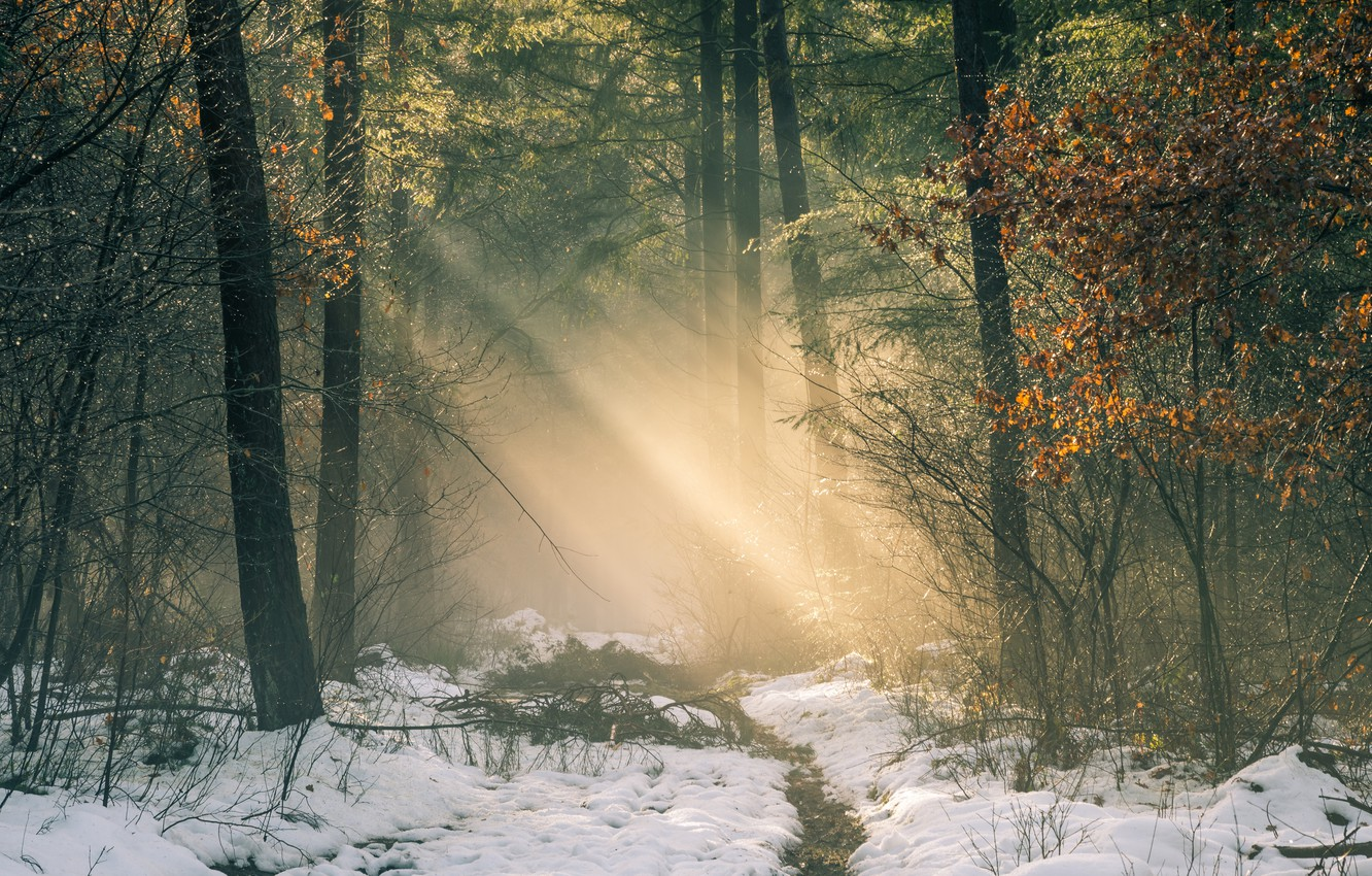 Photo wallpaper winter, road, forest, light, snow, trees, Netherlands, the sun's rays, Netherlands, Gelderland, Gelderland, Garderen, Garderen