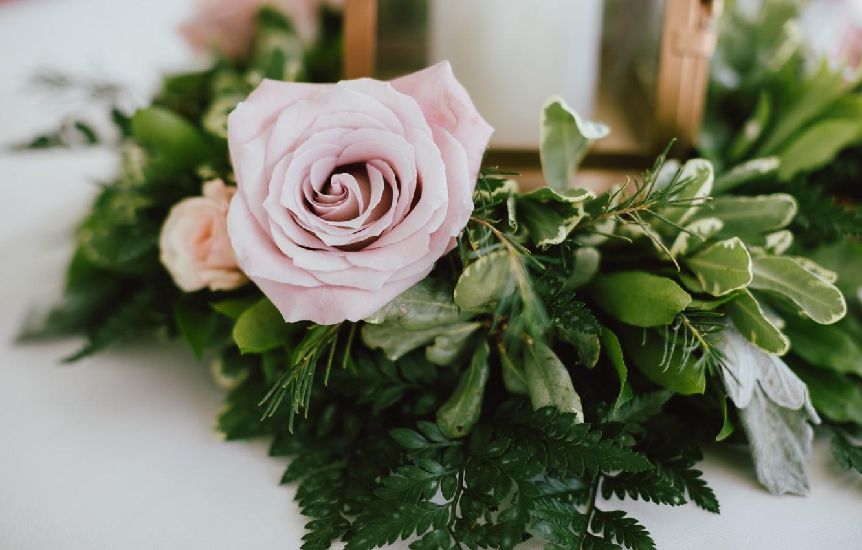 Photo wallpaper flower, leaves, pink, gentle, rose