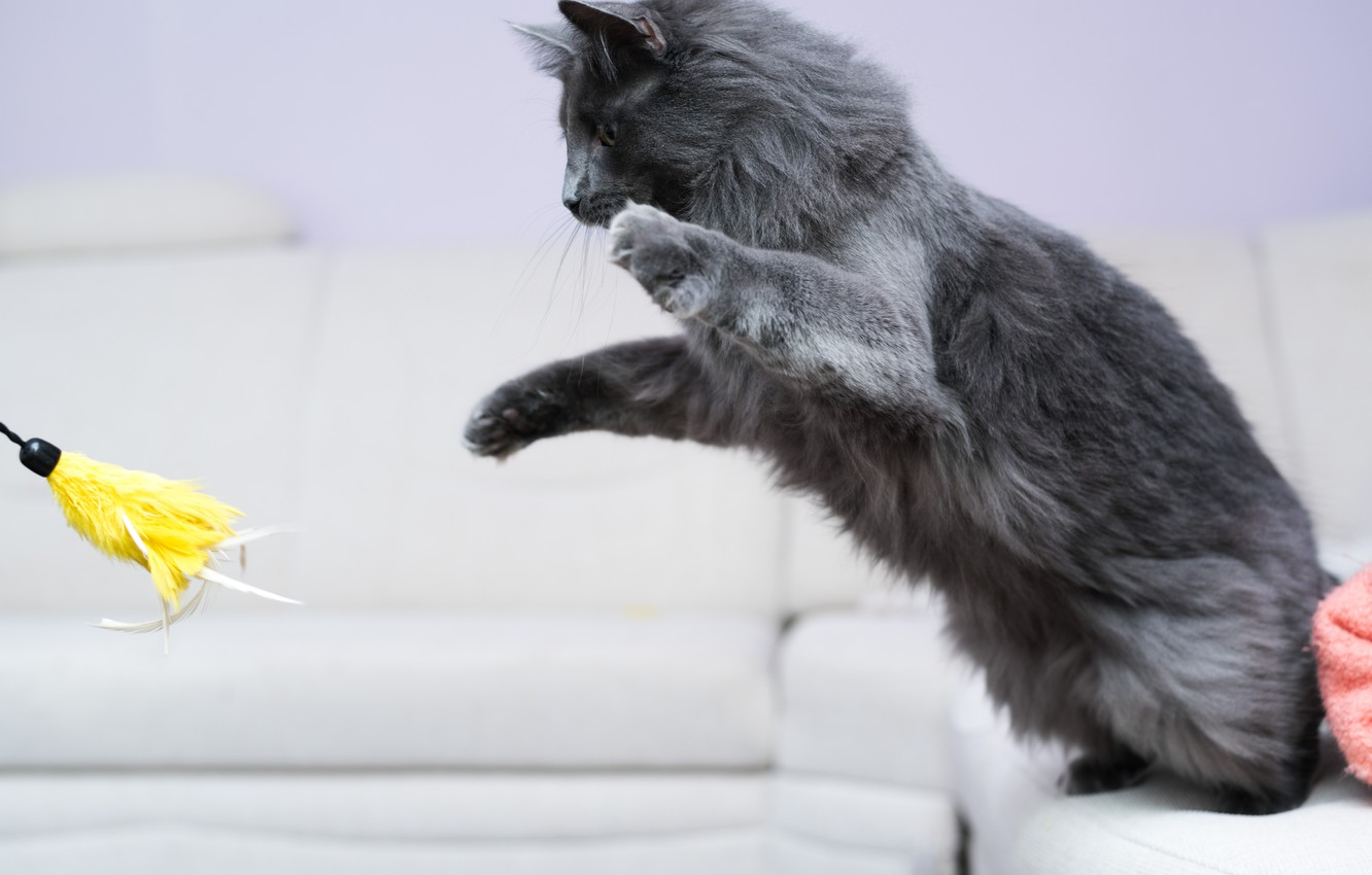 Photo wallpaper cat, jump, toy, the game, paws