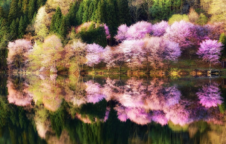 Photo wallpaper forest, water, reflection, trees, nature, Park, color, Spring, Japan, Sakura, landing