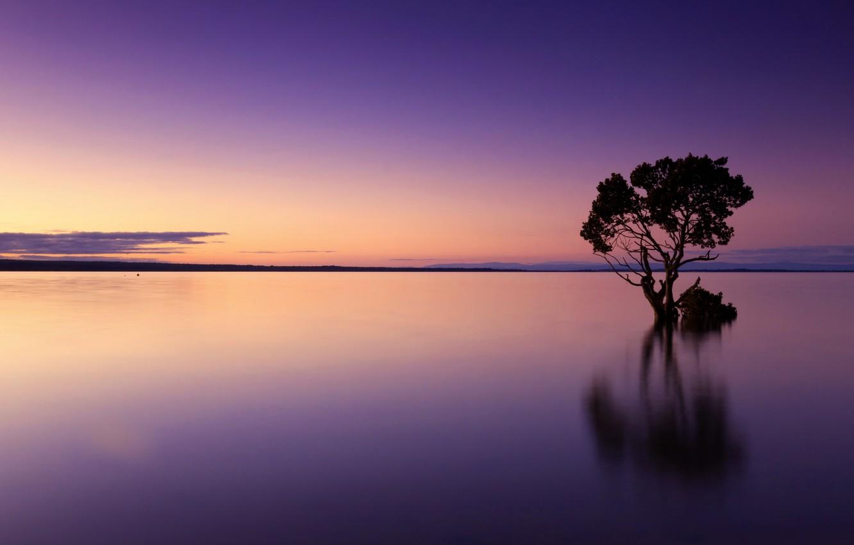 Photo wallpaper landscape, lake, tree