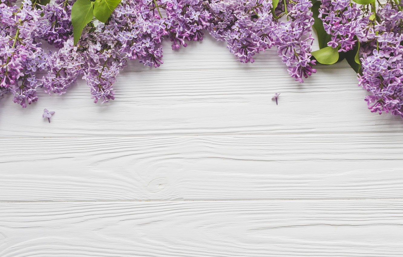 Photo wallpaper Flowers, Branches, Lilac