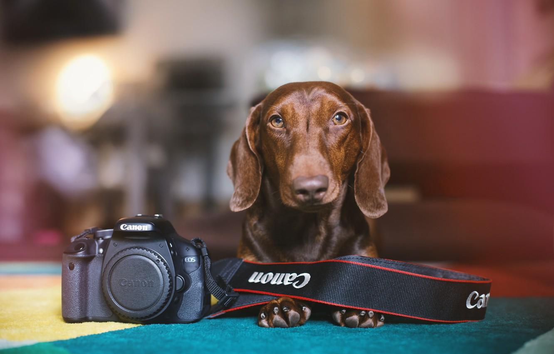 Photo wallpaper each, dog, camera