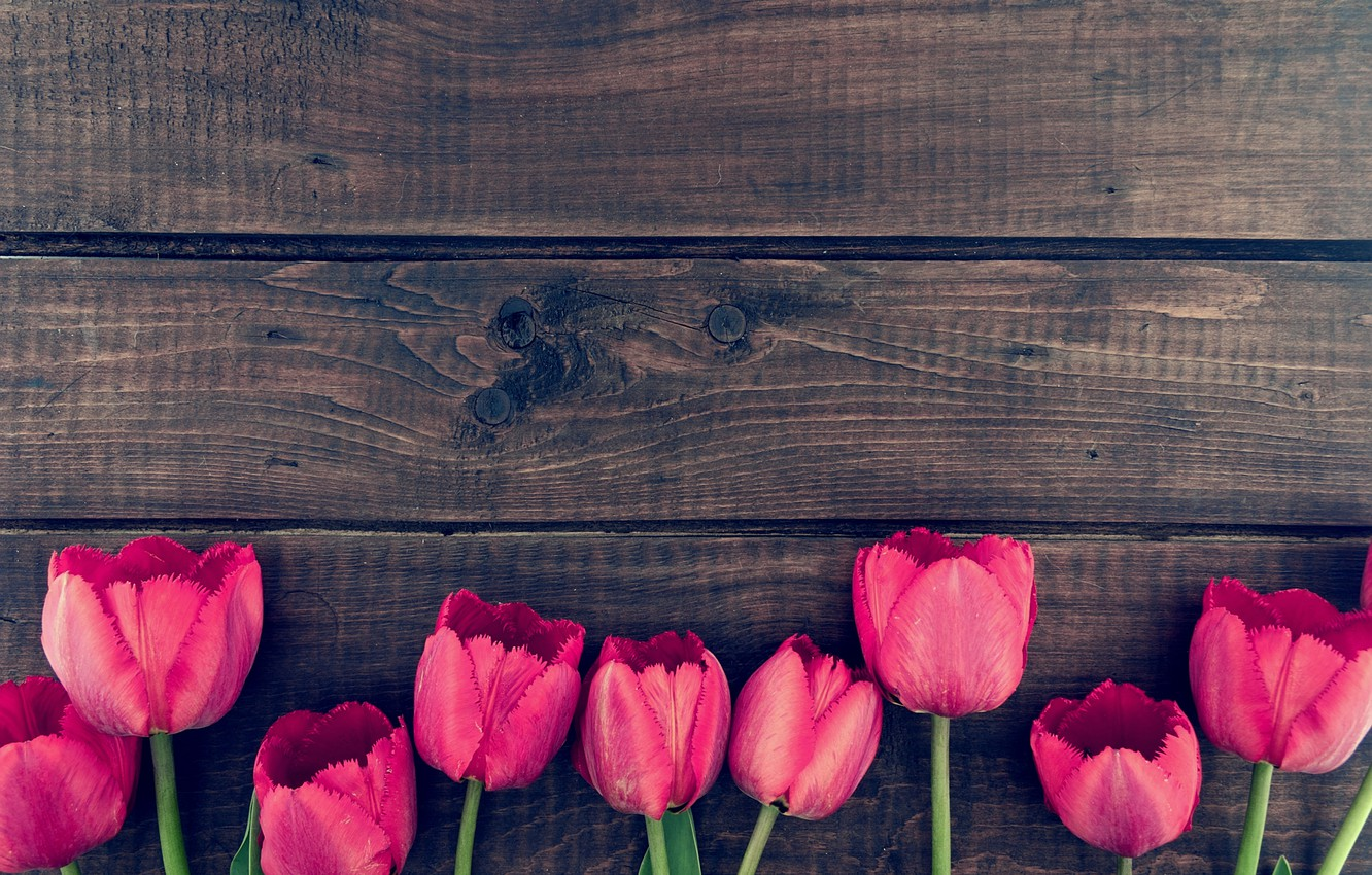 Photo wallpaper flowers, bouquet, tulips, wood, pink, romantic, tulips, spring, pink tulips