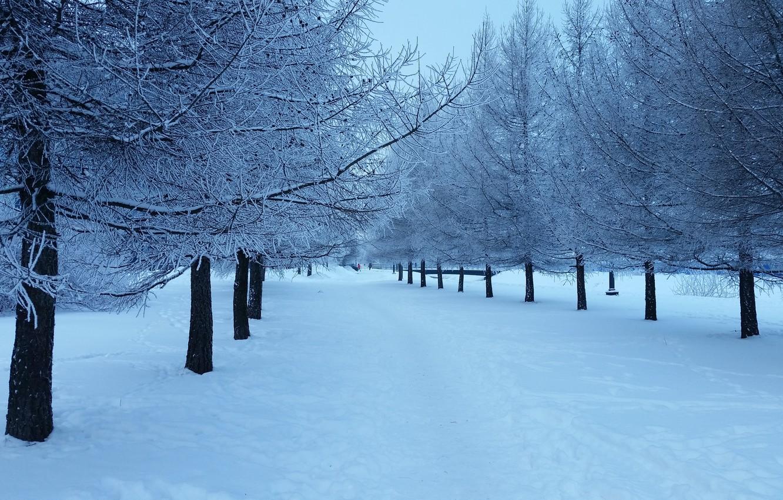 Photo wallpaper Nature, Winter, Snow, Landscape, Tree, Tree, The snow on the tree, Herringbones, The snow on …