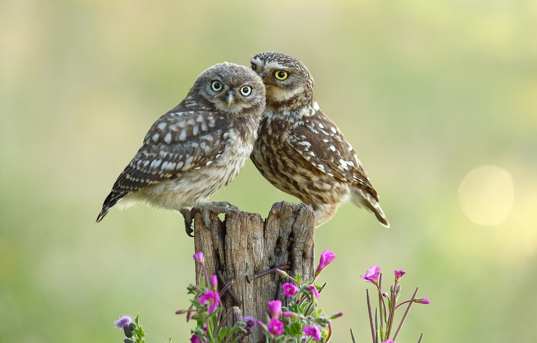 Photo wallpaper flowers, birds, owls, a couple, bokeh, wood