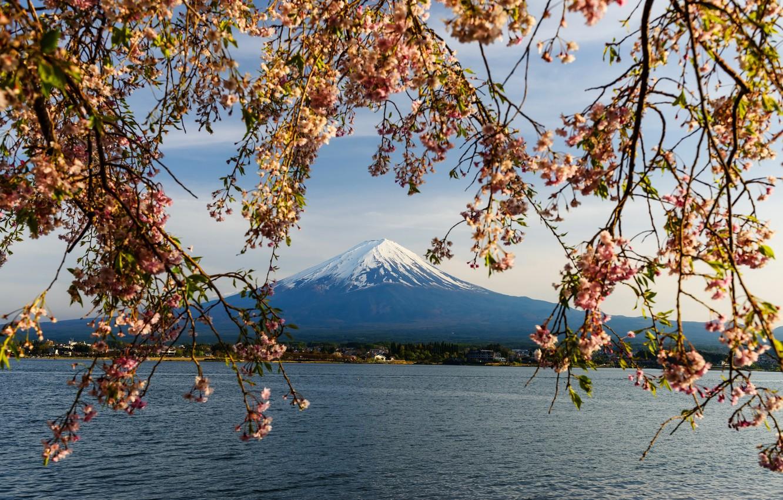 Photo wallpaper the sky, branches, spring, Japan, Sakura, Japan, flowering, mount Fuji, pink, blossom, mountain, sakura, cherry, …