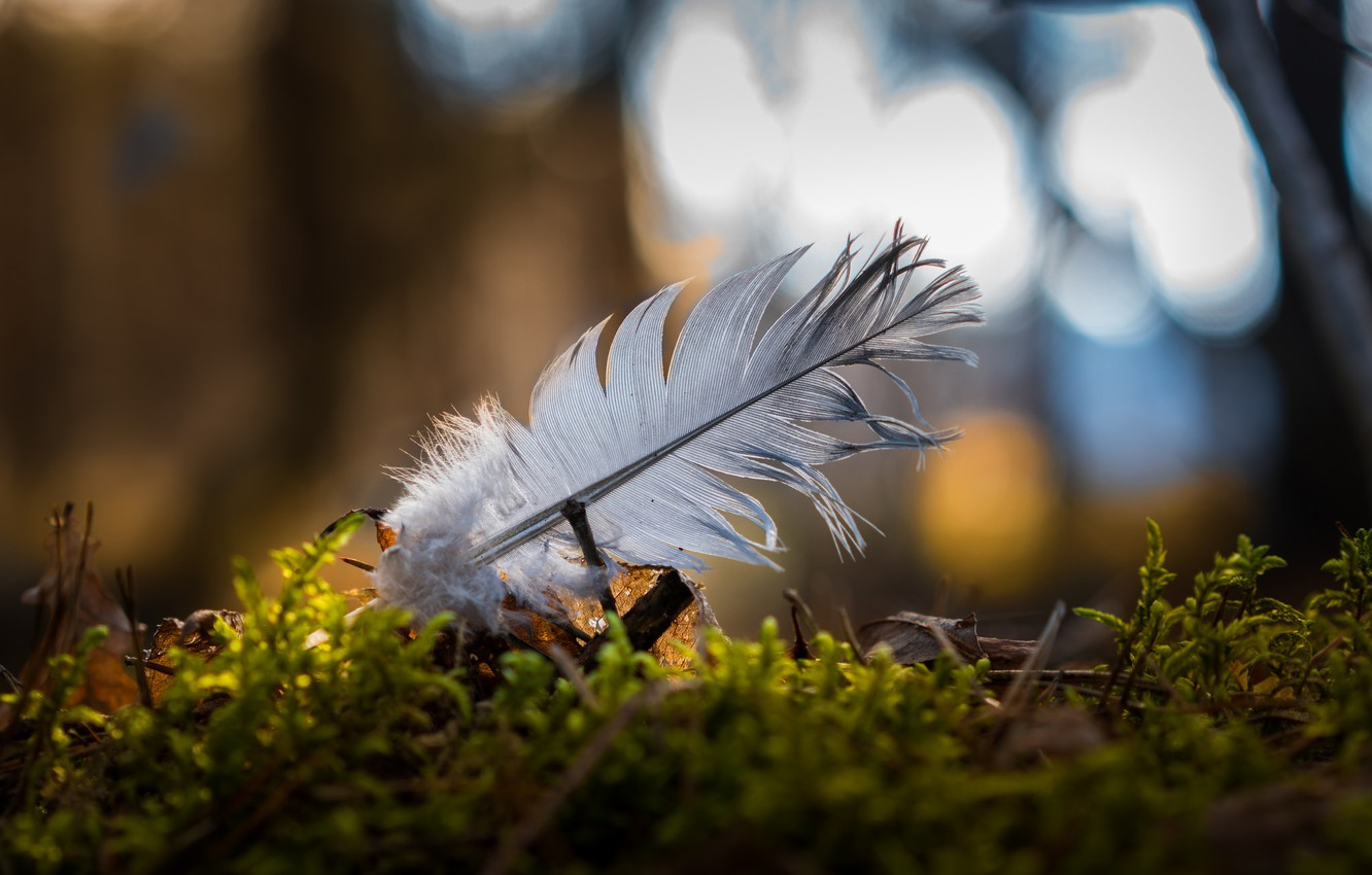 Photo wallpaper macro, bokeh, a feather