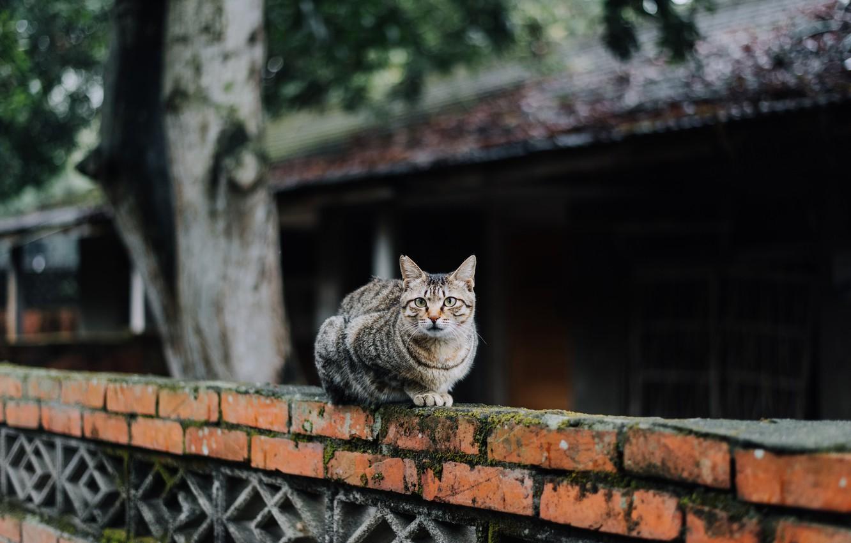 Photo wallpaper cat, cat, looks, striped