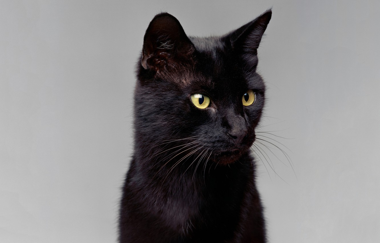 Photo wallpaper cat, mustache, look, portrait, contrast, light background, ears, green eyes, black cat, hair Shine