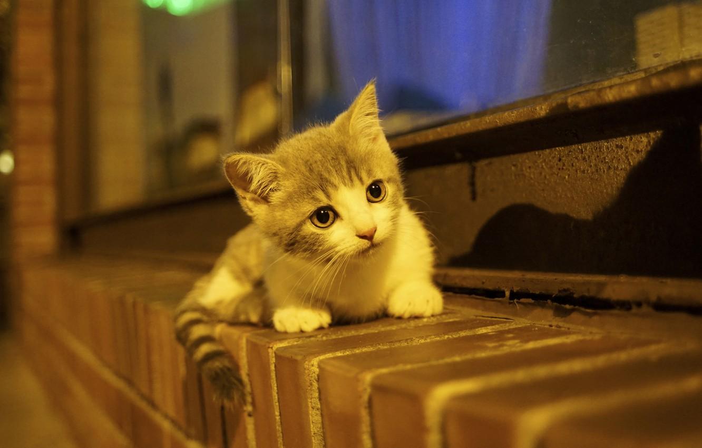 Photo wallpaper baby, kitty, on the windowsill