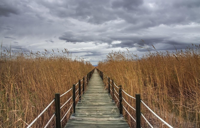Photo wallpaper the sky, bridge, reed