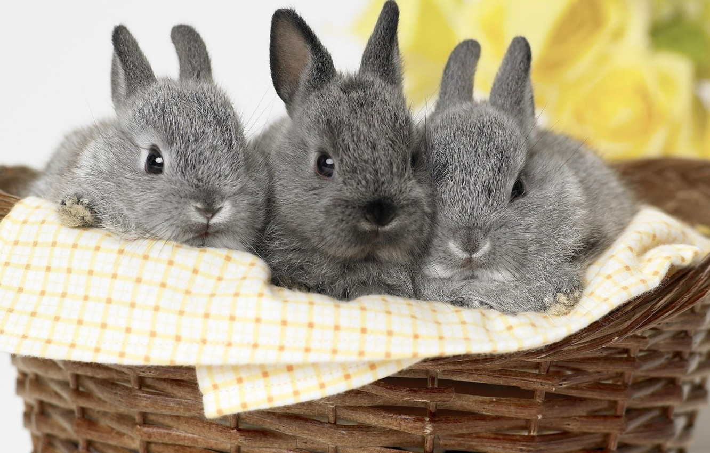 Photo wallpaper grey, basket, rabbits, kids, trio
