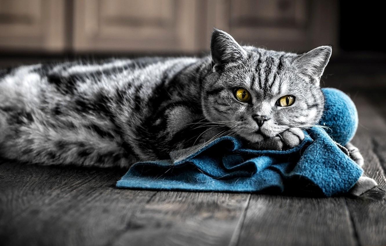 Photo wallpaper cat, look, kitty