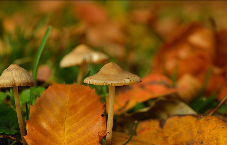 Photo wallpaper Autumn, Leaves, Mushrooms, Autumn, Bokeh, Bokeh, Leaves, Mushrooms