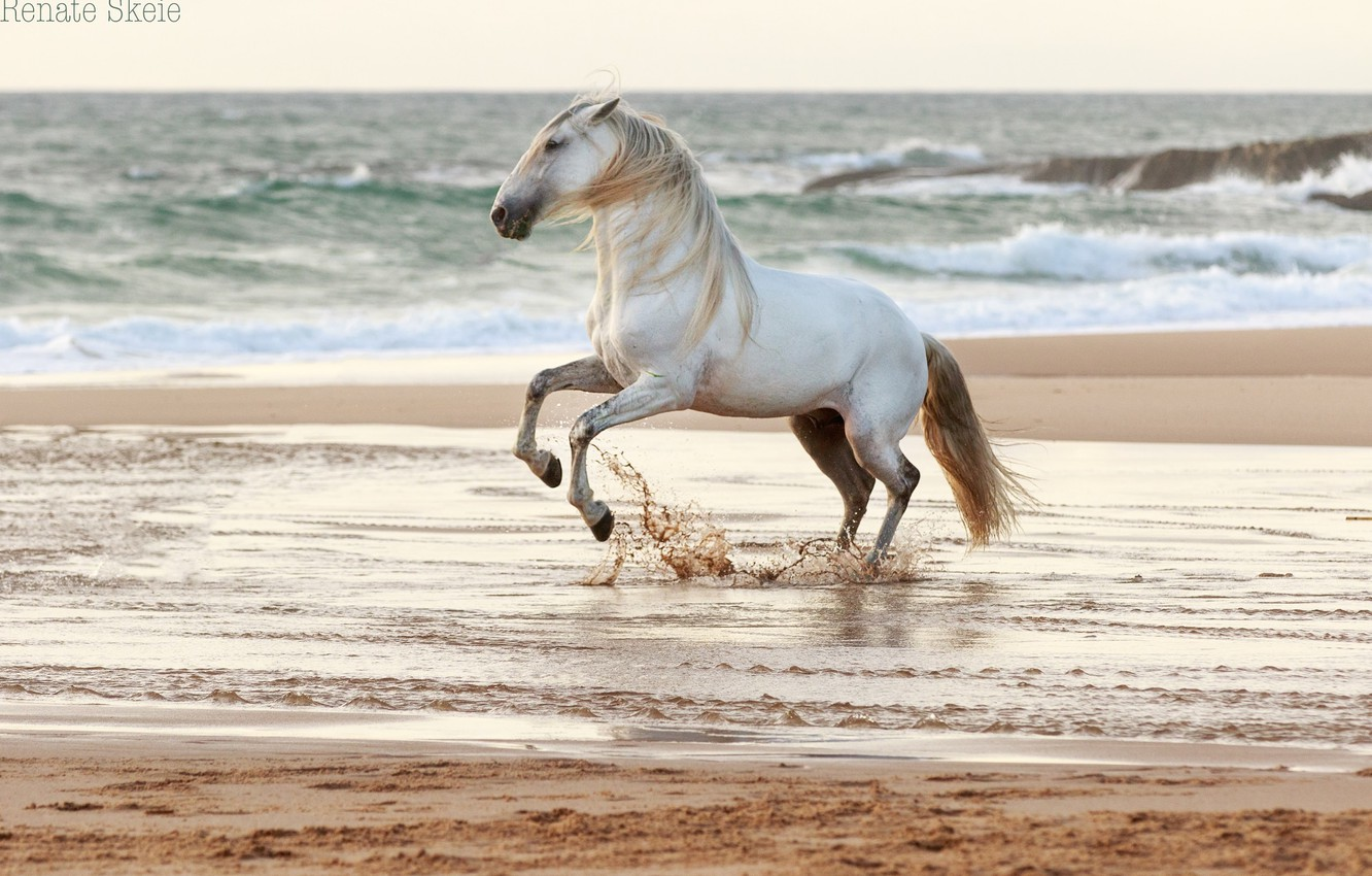 Photo wallpaper sand, wave, water, squirt, grey, horse, the wind, shore, coast, horse, stallion, surf, grace