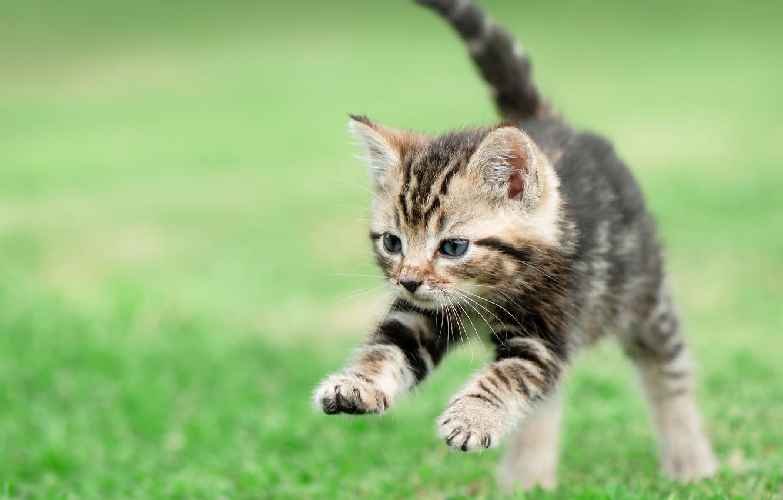 Photo wallpaper kitty, baby, lawn