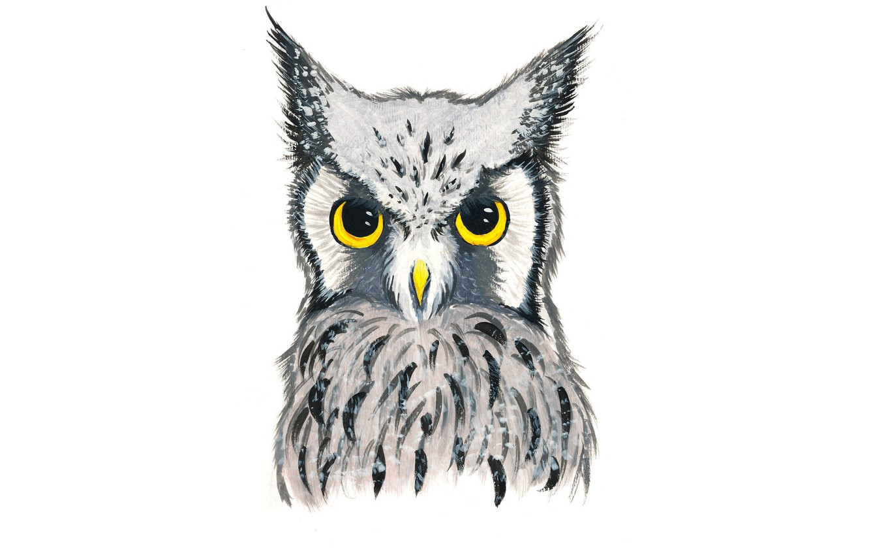 Photo wallpaper owl, bird, owl