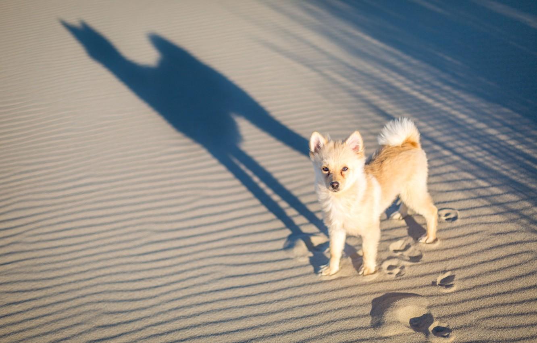 Photo wallpaper sand, traces, shadow, dog, doggie