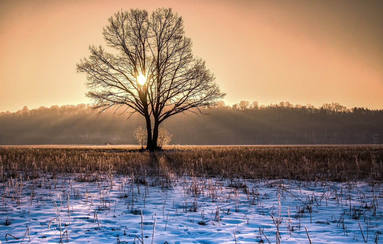 Photo wallpaper winter, light, tree, morning
