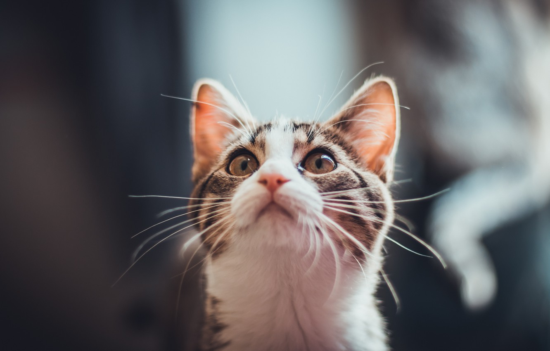 Photo wallpaper cat, cat, mustache, kitty, wool