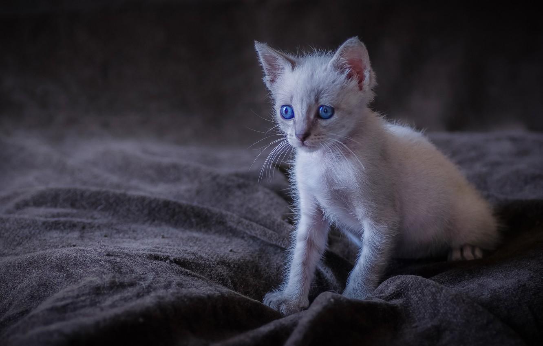 Photo wallpaper baby, kitty, blue eyes