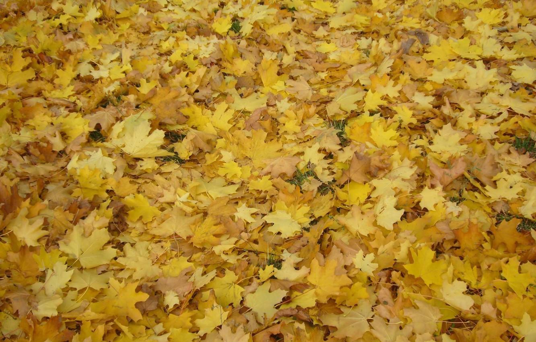 Photo wallpaper autumn, leaves, Park