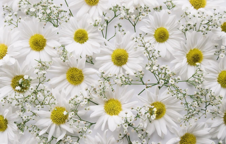 Photo wallpaper flowers, background, branch, chrysanthemum, decor