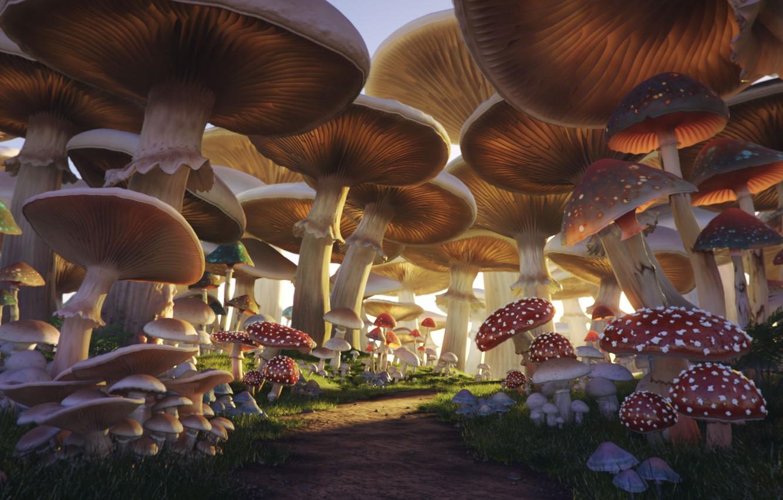 Wallpaper Mushrooms Trail Mushroom Forest Images For