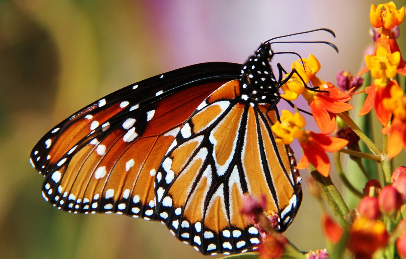 Photo wallpaper flower, nature, butterfly, wings