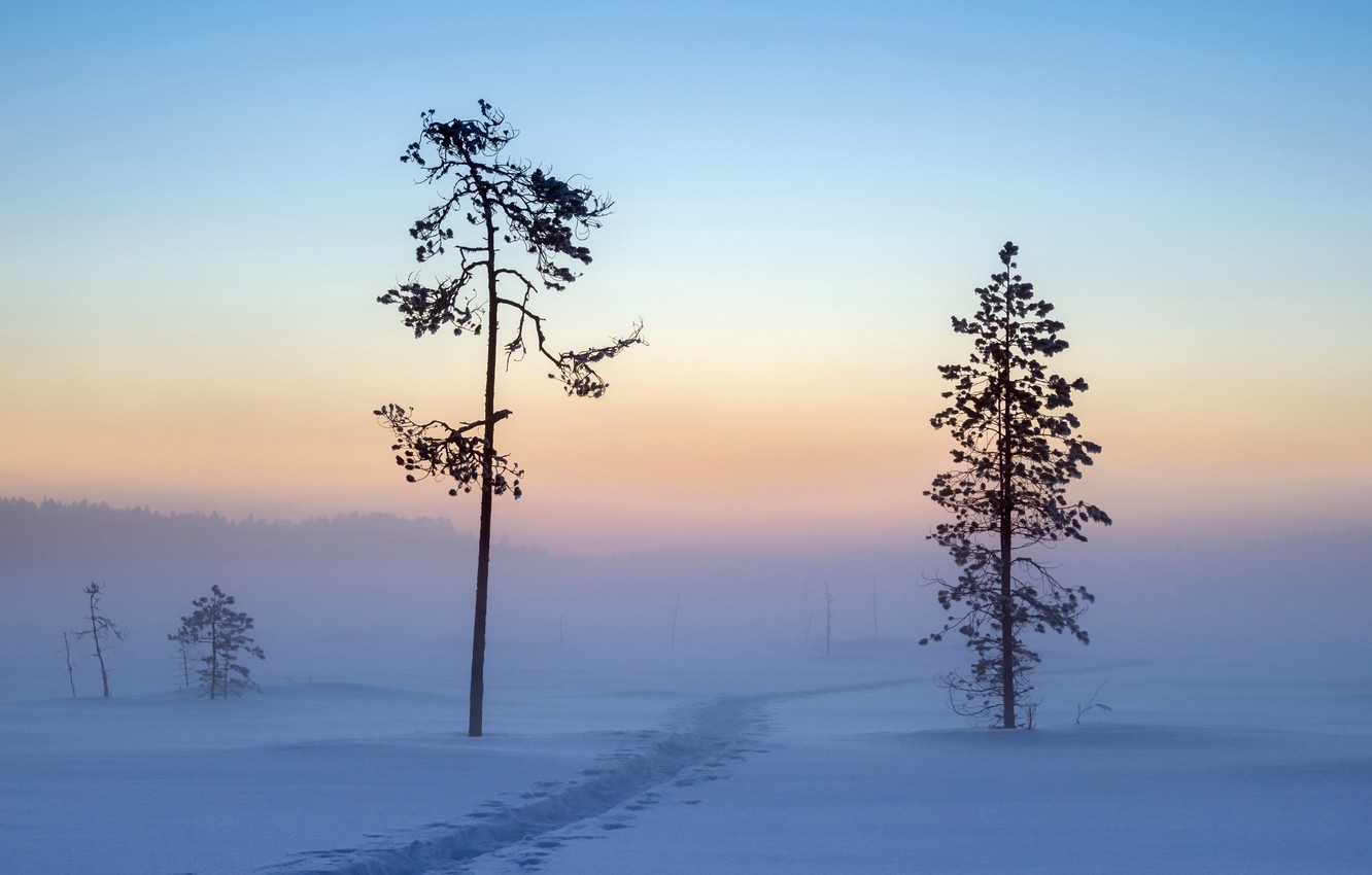Photo wallpaper winter, snow, morning