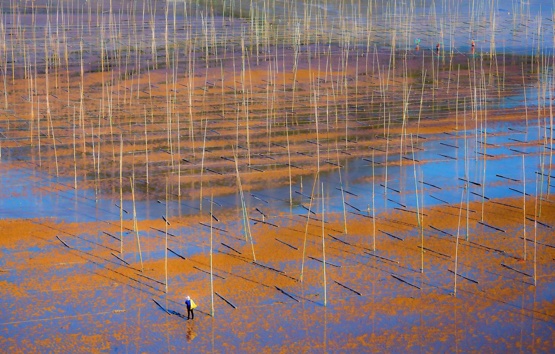 Photo wallpaper tide, China, farm, Fujian