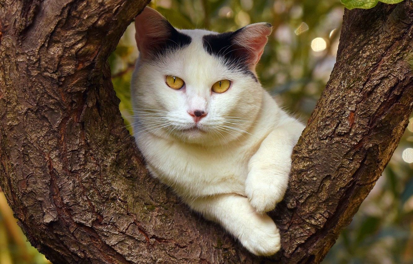 Photo wallpaper cat, summer, cat, face, nature, background, tree, foliage, portrait, paws, trunk, important, yellow eyes, white …