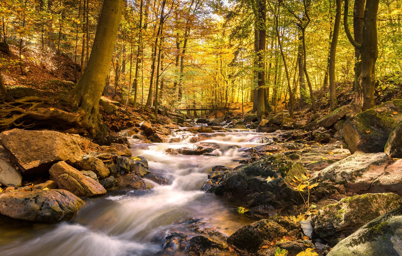 Photo wallpaper autumn, forest, water, bridge, river, stones, waterfall, hdr, ultra hd, 4k, river in the mountains, …