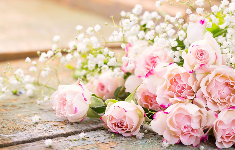 Photo wallpaper roses, pink, flowers, romantic, roses