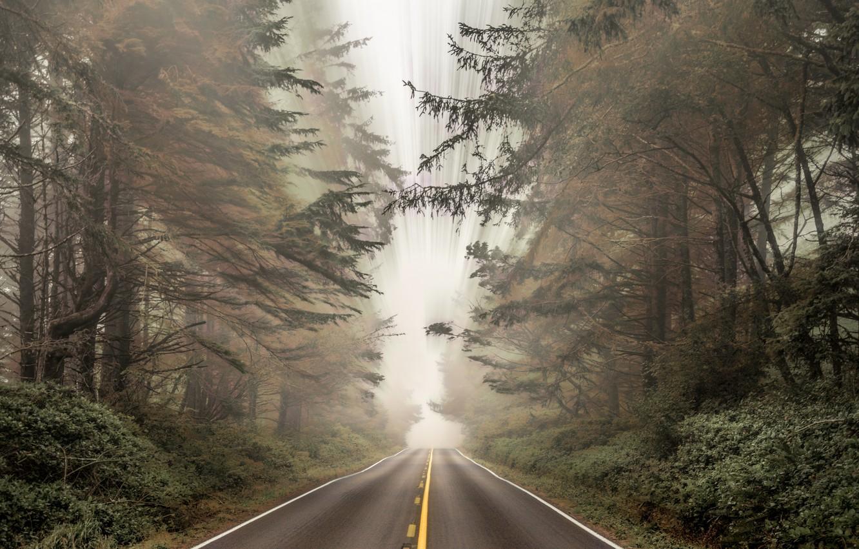 Photo wallpaper road, autumn, forest, nature, fog