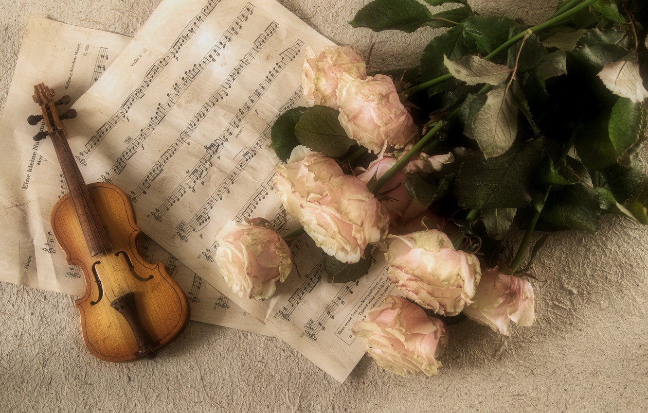 Photo wallpaper notes, roses, Music, Violin, Classic, Tool
