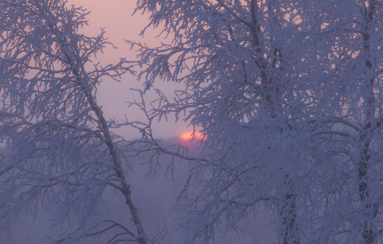 Photo wallpaper winter, frost, trees, sunset, branches, Sweden
