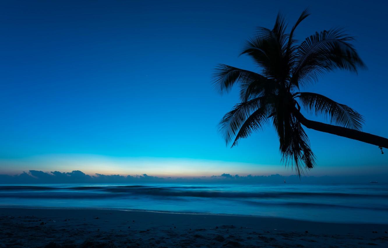 Photo wallpaper sea, beach, summer, night, tropics, Palma, Nature