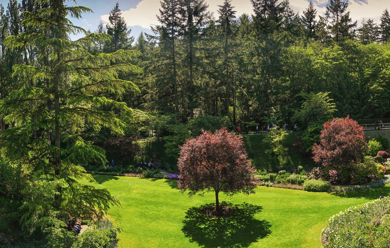 Photo wallpaper greens, forest, summer, the sky, grass, the sun, clouds, trees, flowers, Park, lawn, Canada, panorama, ...