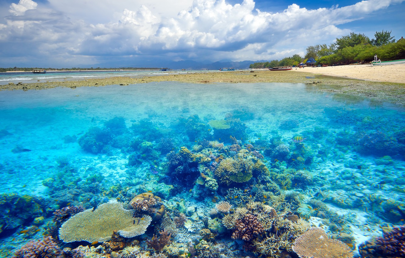 Photo wallpaper water, tropics, shore, the bottom, coral reefs