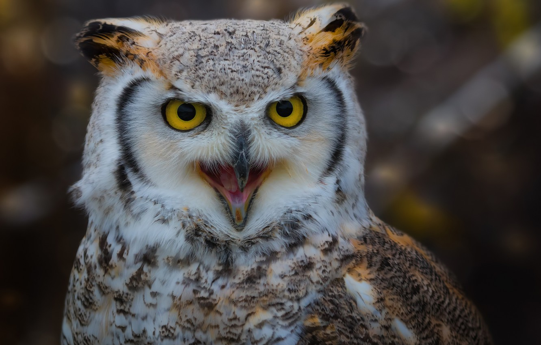 Photo wallpaper owl, bird, feathers