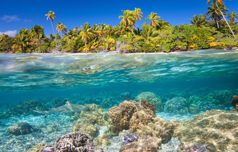 Photo wallpaper sea, water, tropics, palm trees, the bottom