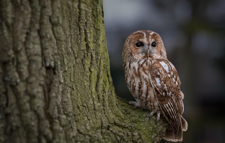 Photo wallpaper tree, owl, bird, feathers