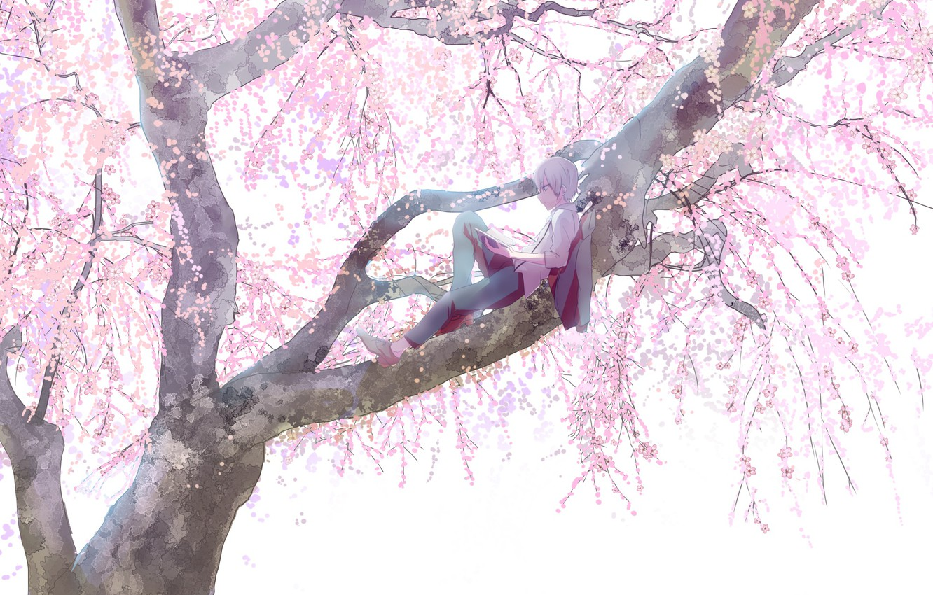 Photo wallpaper branches, stay, spring, boy, Sakura, flowering, on the tree, big tree, reading a book
