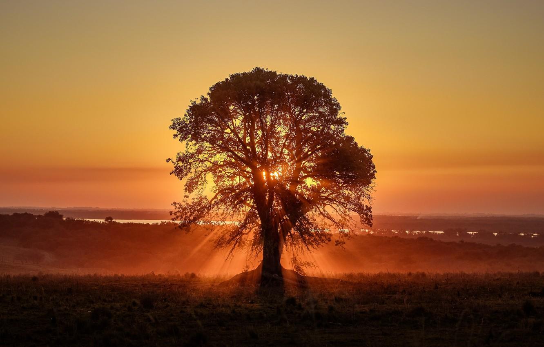 Photo wallpaper the sky, sunset, tree