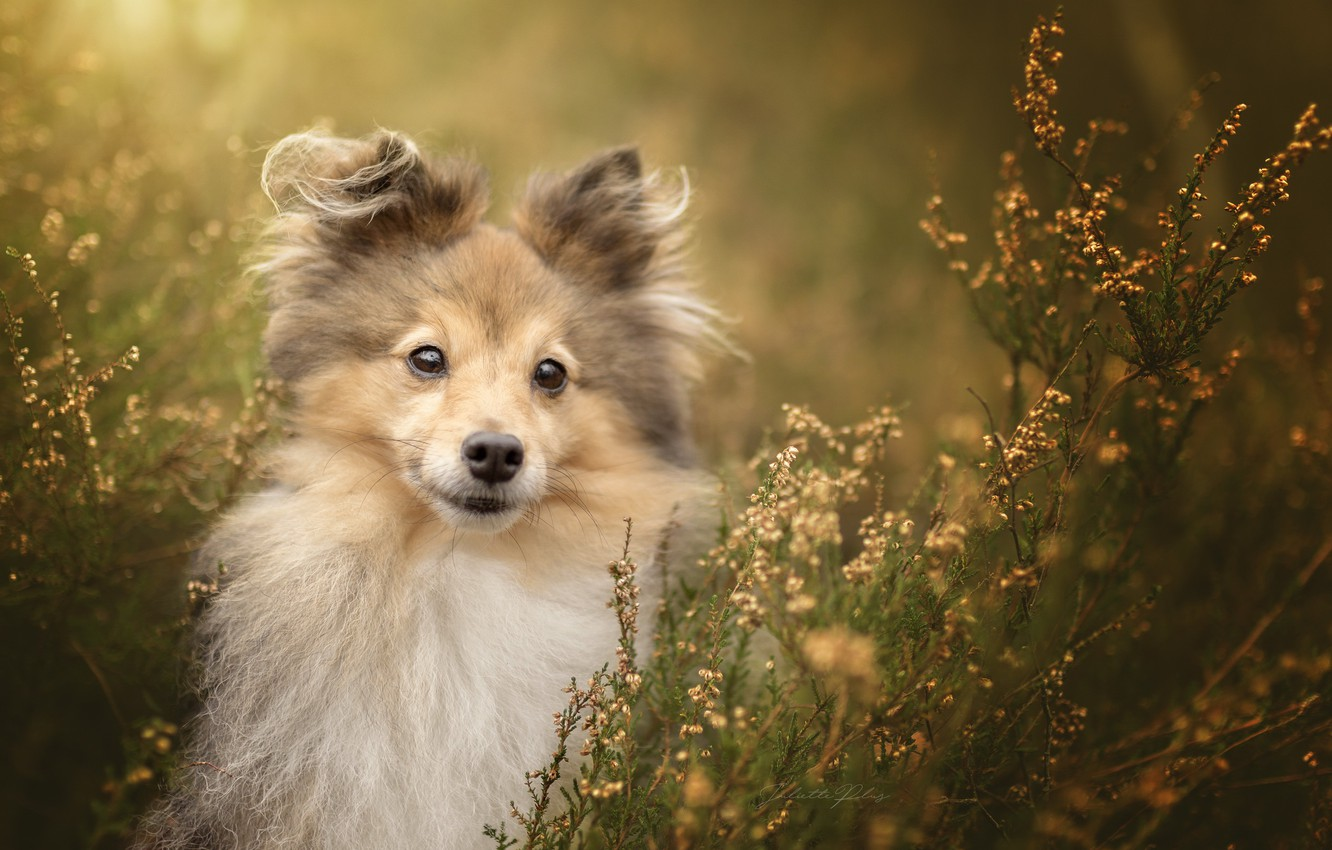 Photo wallpaper look, nature, each, dog