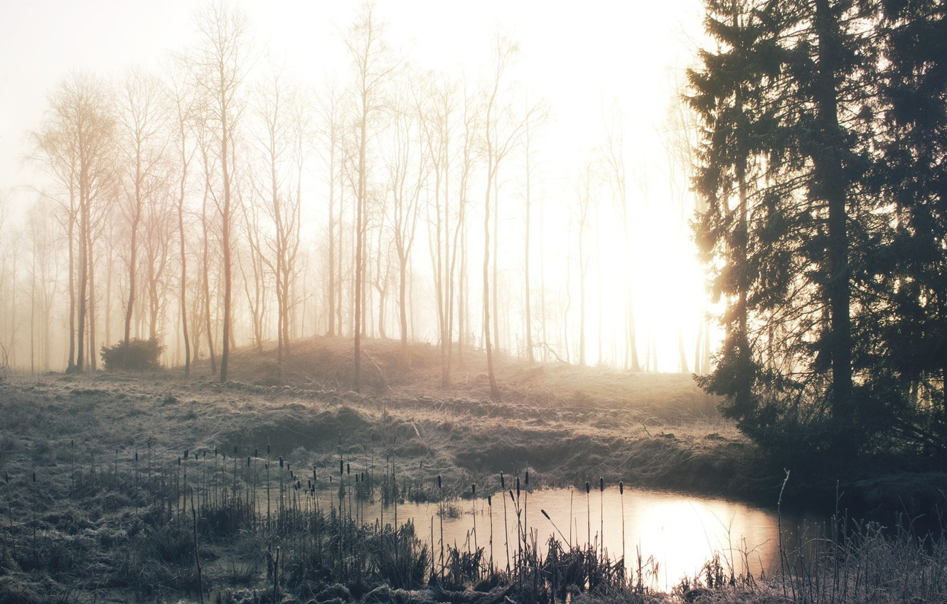 Photo wallpaper winter, frost, forest, grass, trees, fog, lake, dawn, morning, reed, cattail, frost
